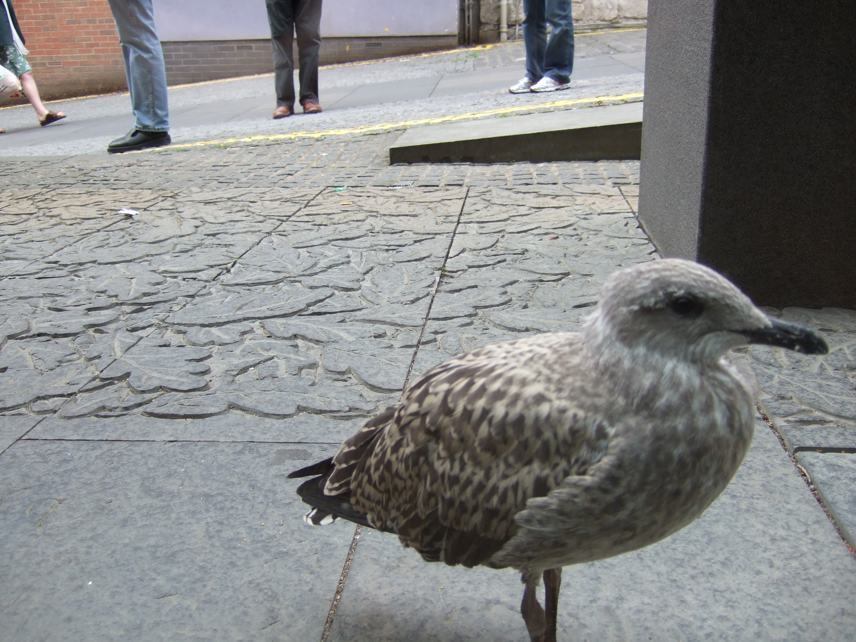 baby seagull 4 | Our sweet old etcetera